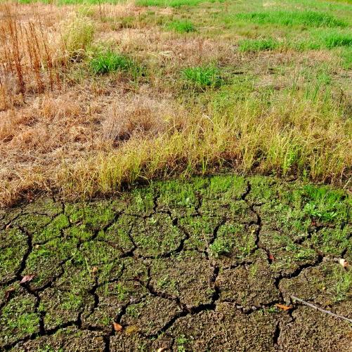 耕作放棄地の削減